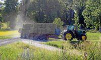 Foderskörd från trädor godkänns av EU