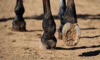 Frias från ansvar efter spark av häst