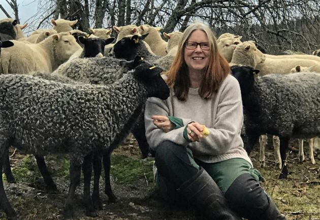 Exakt hur många försäljningar som skett är inte kartlagt men en uppskattning är en omsättning på 1,5 ton ull per år till ett värde av cirka 100000 kronor.