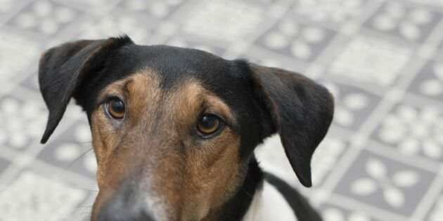 Hundens 5 vanligaste sjukdomar – så håller du koll!