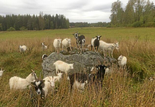 Maria Brook i Österfärnebo har fotograferat sina unggetter.