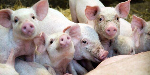 Jordbruksverket JO-anmäls för nya kultingregler