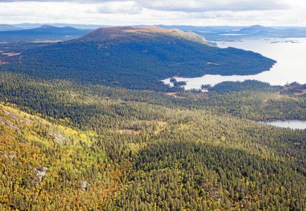 När skogsbruket i den fjällnära regionen upphör kommer det får följdeffekter på hela den lokala ekonomin, infrastrukturen och jobben, skriver Paul Christensson.