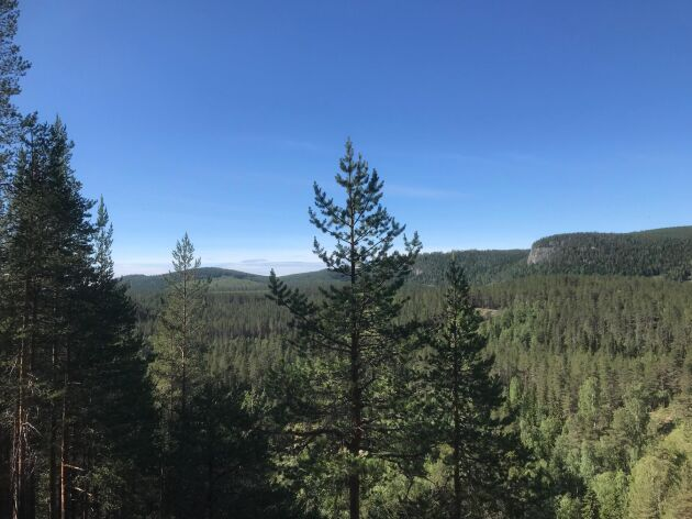 Skogsprogrammet är en del av januariavtalet och just nu pågår det ett arbete med att ta fram regionala program och strategier.