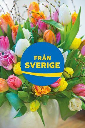 Svenskodlade tulpaner i vasen.
