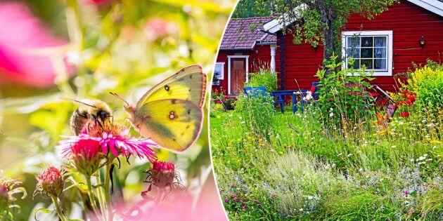 Hjälp den biologiska mångfalden i din egen trädgård – 8 bra tips!