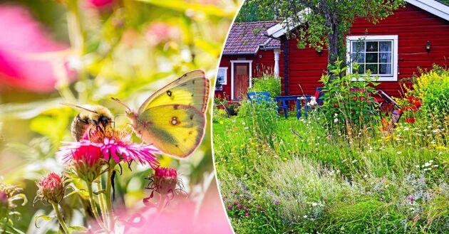 Öka den biologiska mångfalden i din trädgård med hjälp av de här 8 tipsen.