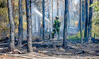 Flera skogsbränder kan vara anlagda