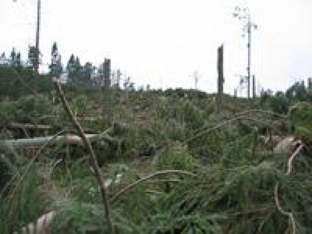 Stormskador. Gudrun dånade in över landet natten till den 9 januari 2005. Resultatet blev en naturkatastrof av historiska mått. Foto: Kerstin Davidson