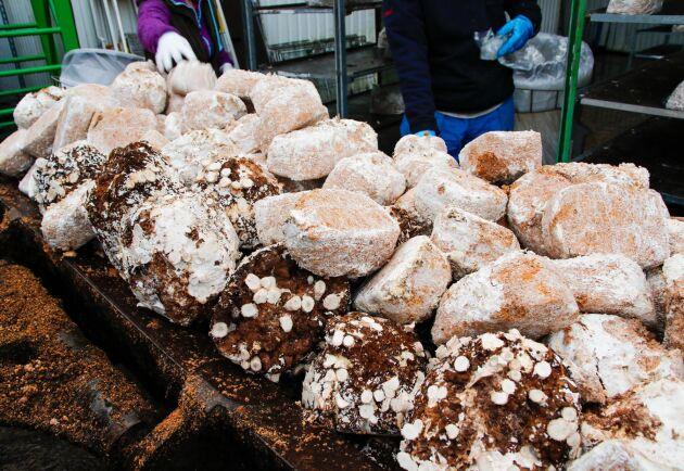 En av de första åtgärderna för att effektivisera odlingen var att dela upp odlingen, i dag odlas det champinjoner på den nya odlingsanläggningen i Torna Hällestad och exotiska svampar i den äldre anläggningen i småländska Hallaryd.
