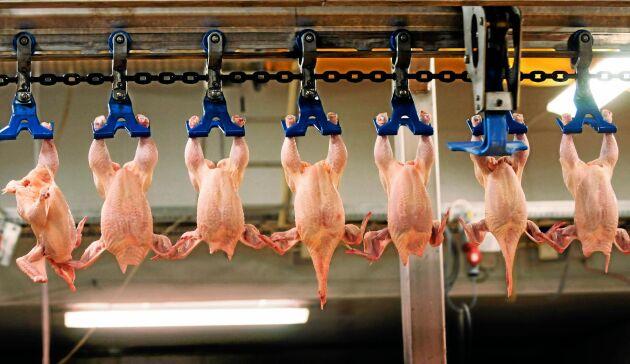 Slakteriet anmäldes i april, efter att det förra året framkommit att minst tio kycklingar skållats levande.