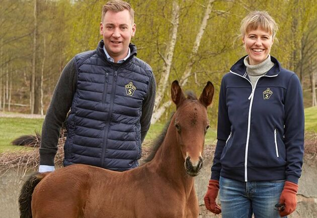 """Tillsammans med SWB:s avelsledare Emma Thorén Hellsten har Gustaf Johansson, som också sitter i SWB:s styrelse, starta en podd om hästavel. """"Jag googlade och hittade poddutrustning i Danmark som vi köpte. Det är jobbigt att höra sin egen röst. Men det blir bättre och lättare för varje avsnitt"""", säger Gustaf Johansson."""