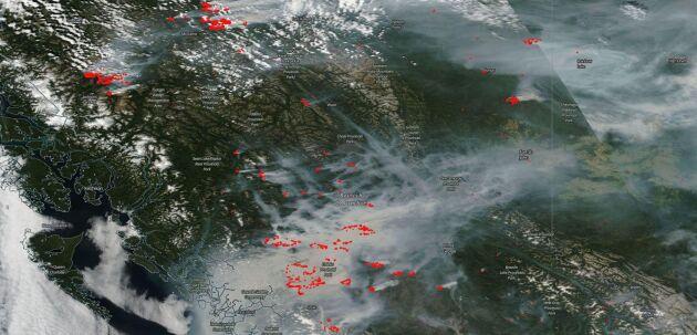 Röken som sprider sig över stora delar av British Columbia syns på NASAs satellitbilder. Just nu pågår 56 större bränder.