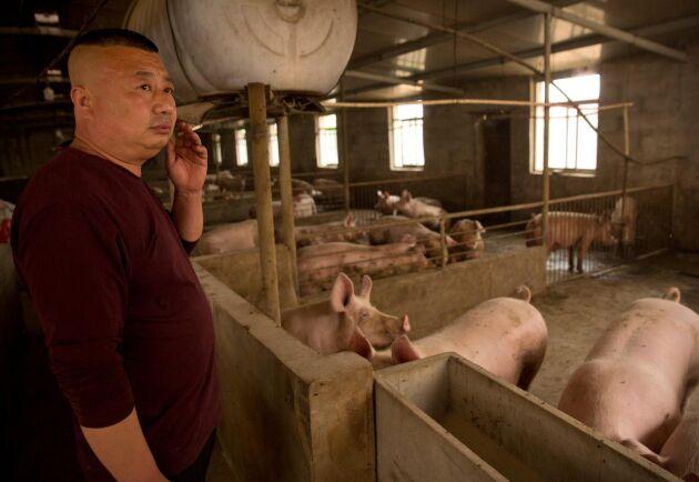 Fläskbonden Zhang Shuai vid sina grisar i Hebeiprovinsen i maj, då priserna redan stigit 40 procent. Sedan dess har de fortsatt att skena.