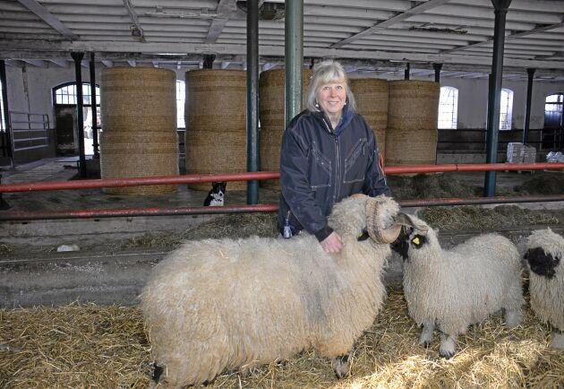 Marita Tauni och Åkerbo Blacknose har investerat ungefär två och en halv miljon i svartnosfåren. Besättningen växer snabbt och är idag den största utanför Schweiz.