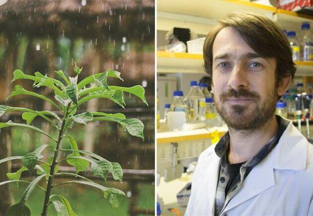 Ny forskning kan leda till smartare odling.