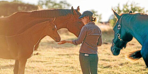 Fler gör ett riktigt hästjobb