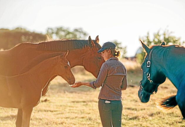 Hästföretagaren Anna Nilsson driver Mannegårde hingststation på Gotland.