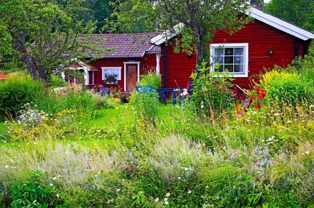 Ta hand om det vilda du har. Även en liten kant med vilda blommor hjälper insekterna.