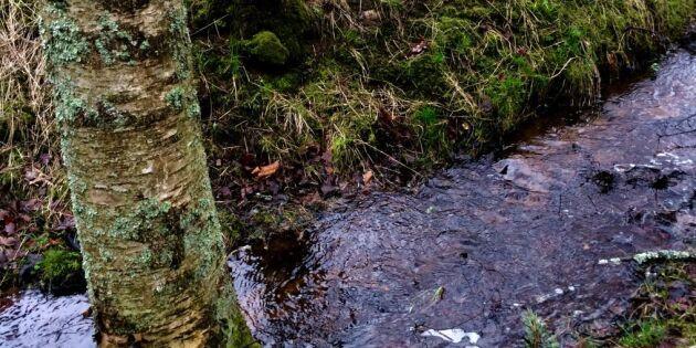 Grundvattnet högre men mer regn krävs