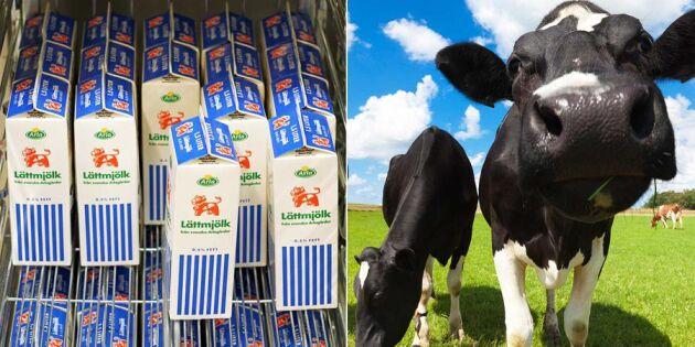 """Mjölkbonden rasar: """"Det värsta året någonsin"""""""