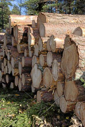 Höga virkespriser, högre volymer och en större efterfrågan på skogsbränsle gynnar just nu Mellanskog rent resultatmässigt.