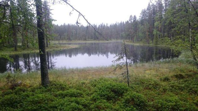 På fastigheten i Lovvika i Tornedalen som är till salu och som filmats med drönare finns denna lilla fina skogstjärn.