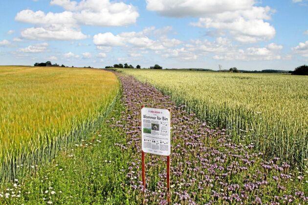 """Insådden görs för att gynna vilda pollinatörer och är en del i projektet """"Blommor för bin""""."""