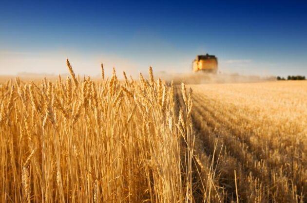 Sanktionerna mot Ryssland fick motsatt effekt och nu utvecklas ryskt jordbruk i en rasande takt