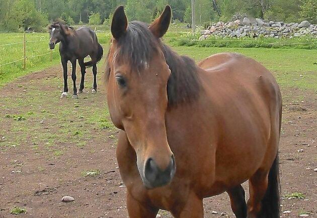 Lyckligtvis befann sig hästarna i hagen och inte i stallet på måndagskvällen.