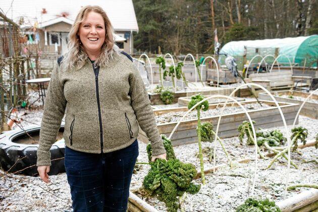 Även på vintern kan Christina skörda ur odlingslådorna, krispig grönkål. I fjol sattes grönkål på åtta ställen i trädgården för att sprida riskerna för skador av ohyra.