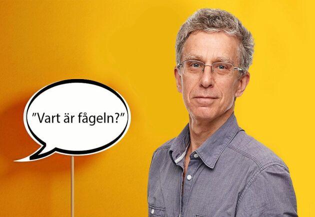 Lands krönikör Håkan Steen frågar sig var känslan för språket har tagit vägen.