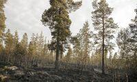 40 miljoner till kommuner som härjades av bränderna