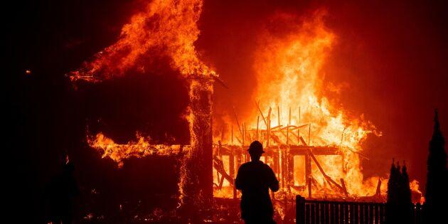 Skogsbranden slukade hel stad – tiotusentals på flykt