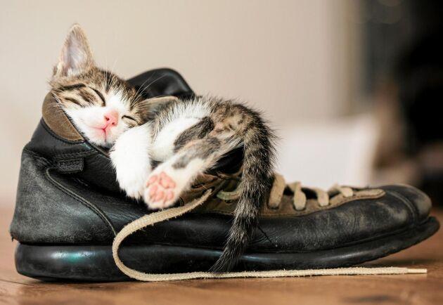 Har katten somnat vill den vara i fred. Du får ta tofflorna.