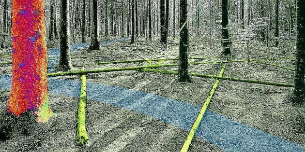 Effektivare skogsbruk med digital hjälp
