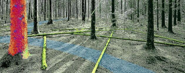 Virtuell skogsmiljö.
