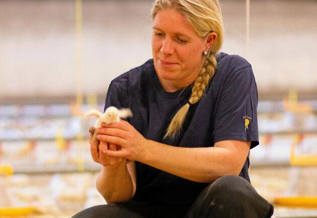 Jenny Andersson, ordförande för Svensk fågel, har jobbat med kycklinguppfödning i 20 år.