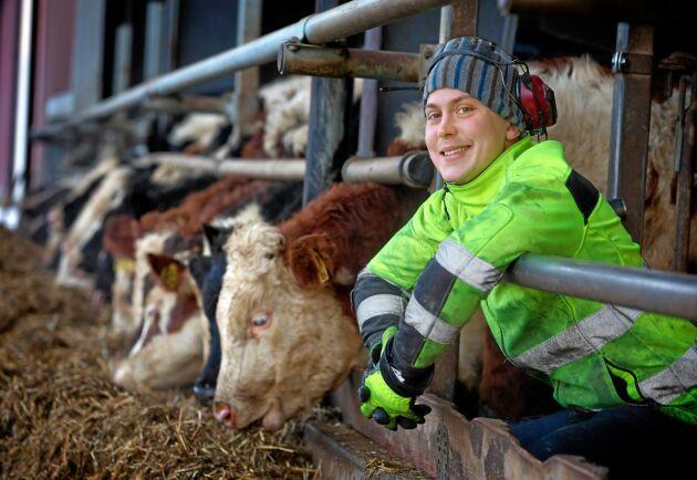 De nyinköpta kalvarna ställs först i rundbågshallarna några veckor för att bygga upp sitt immunförsvar innan de placeras i stallet med tjurarna. Det ökar tillväxttakten och förbättrar kalvhälsan.