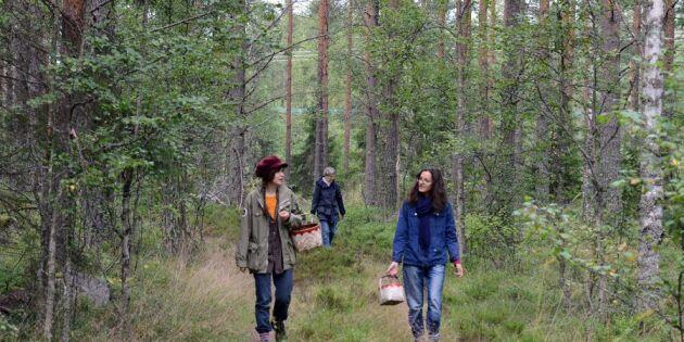 Så går du säker i skogen under älgjakten
