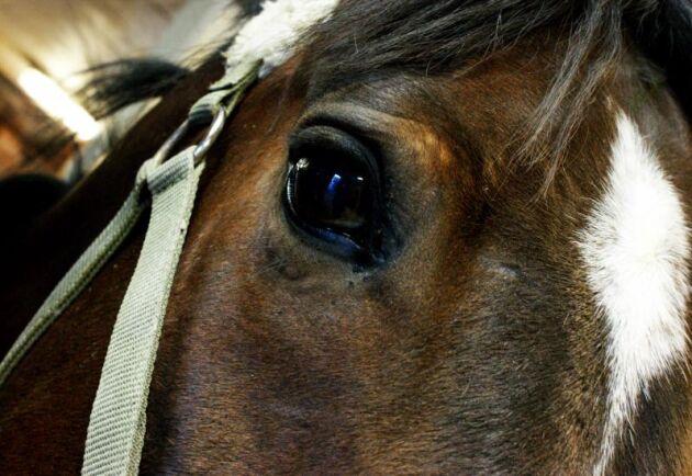 Hästhandlaren sålde samma häst två gånger trots att den var skadad. Arkivbild.