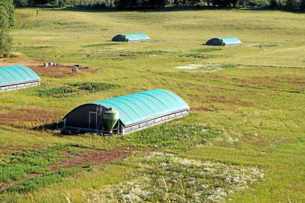 Kycklingstall. Körslättsgård producerar ekologisk slaktkyckling i flyttbara hus.