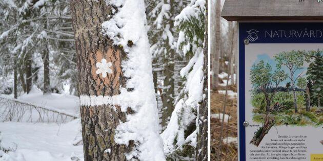 Högre andel skydd i skogsfattiga län