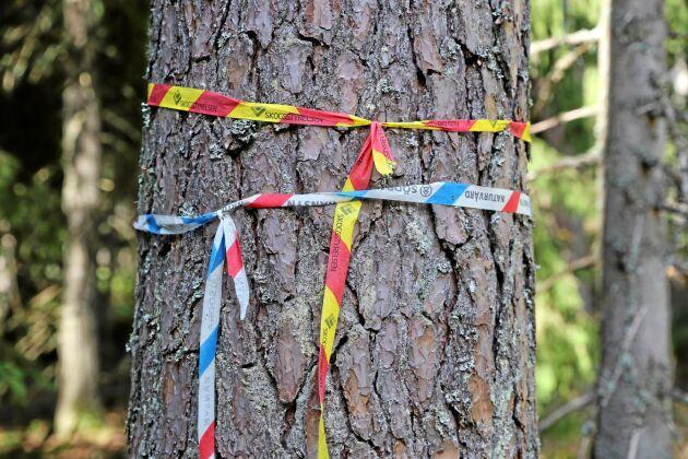 Södra och Skogsstyrelsen är oftast eniga om vilka träd som ska sparas för miljöhänsyn i skogen.