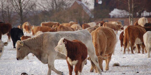 Riksdagsmajoritet: Utred djurförbudsbeslut i domstol
