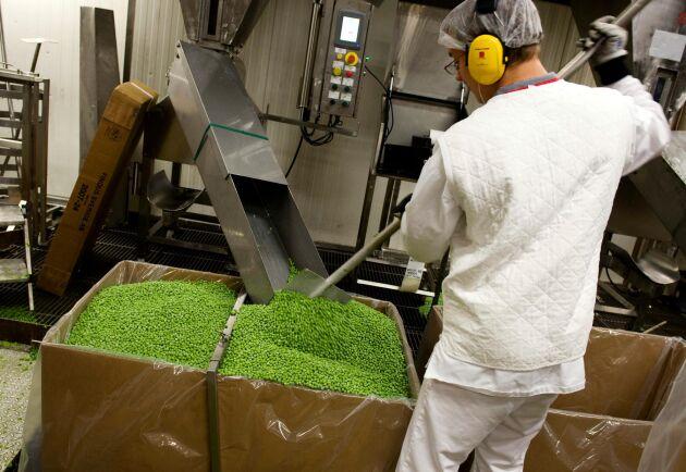 Neddragna odlingar och förra årets torka har gjort att frysdiskarna gapat tomma i facken för svenska gröna ärtor.