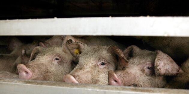 25 nya exportmarknader för svenska livsmedel