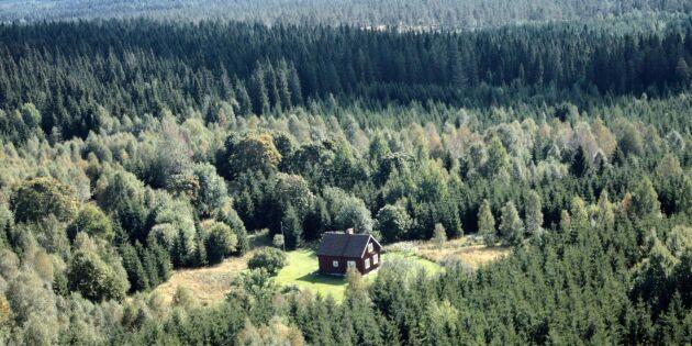 Skogsbarometern: Skogsägarna är optimistiska