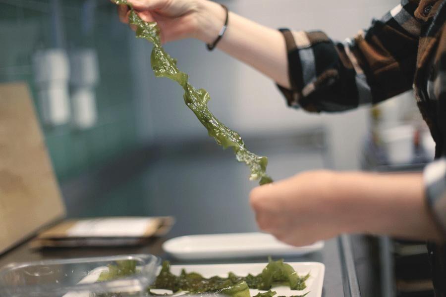 Sockertången, som har långa, stora, brungröna blad som växer på stjälk, är god att steka, wooka, fritera eller att göra tångchips av. Foto: Cimon Lundberg