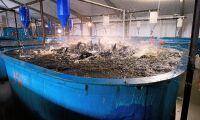 Gårdsfisk tävlar om halv miljon